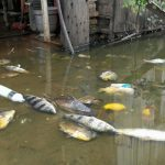 Vecinos de Tablada denuncian mortandad de peces